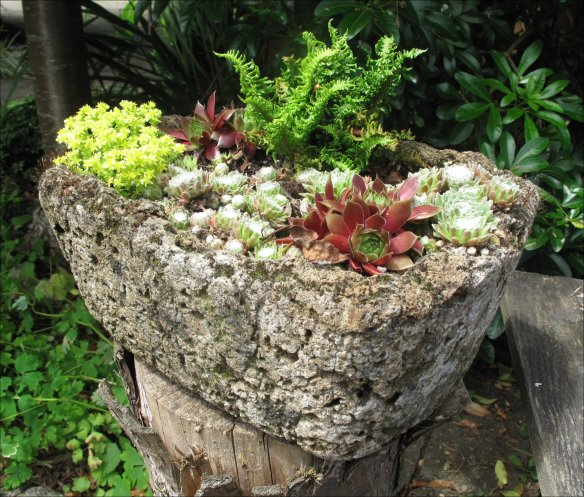 trough bound sedum