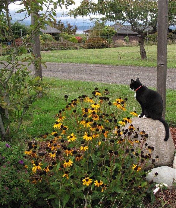 fletcher rain garden