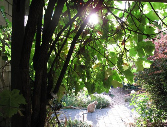Morning sun from grape arbor