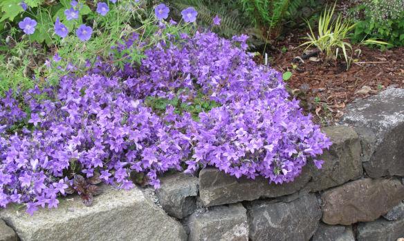 Great Plant Pick 2012
