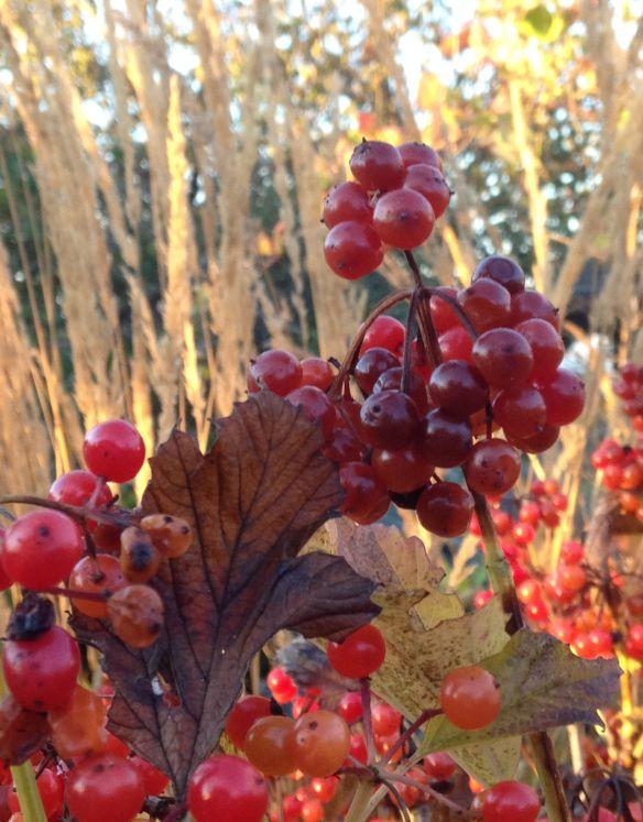 id berries